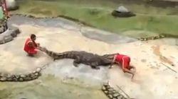 Ce dresseur se fait mordre par un crocodile en plein
