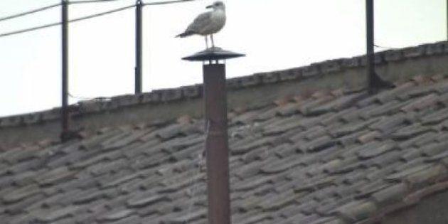 Conclave : une mouette (ou plutôt un goéland) s'incruste sur la cheminée de la chapelle