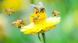 Une preuve de plus que certains insecticides tuent les
