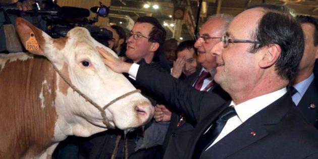 François Hollande préfère les éleveurs aux
