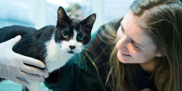 Chat perdu il y a 7 ans: la famille berlinoise retrouve son animal de compagnie le jour de