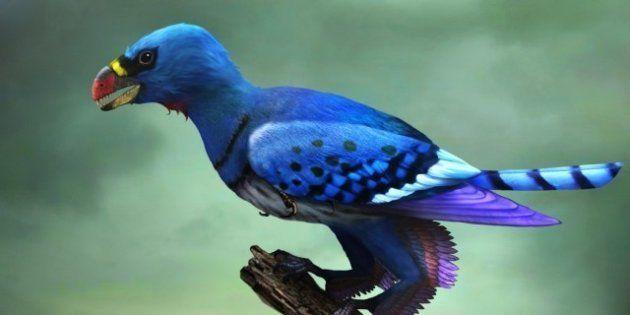 Les premiers oiseaux avaient quatre