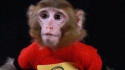 L'iran aurait de nouveau lancé un singe dans