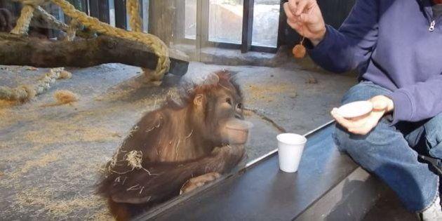 VIDÉOS. 10 vidéos consacrées aux animaux qui ont fait le buzz en