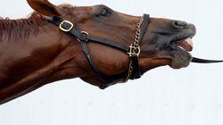 Trafic de viande de cheval : vaste opération dans 11