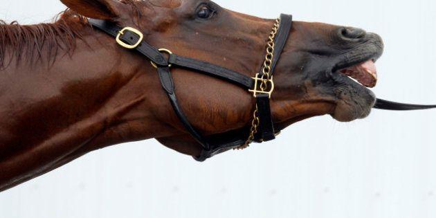 Trafic de viande de cheval: vaste opération de gendarmerie dans 11