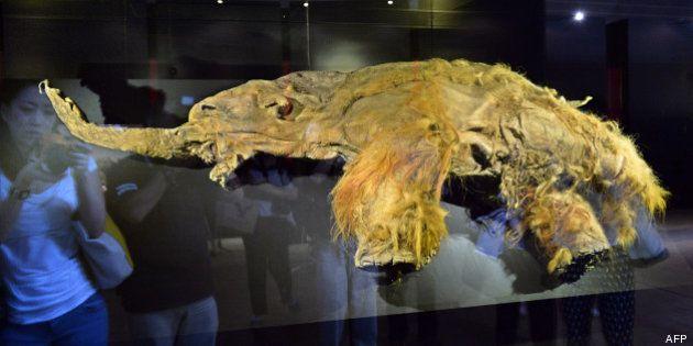L'ADN du mammouth pourrait permettre la résurrection de