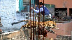 Un léopard dans la