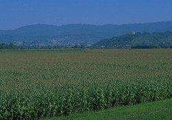 Eau et Agriculture : tour d'horizon, en France et dans le