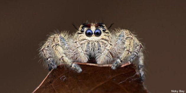 PHOTOS. Araignées: les spécimens les plus impressionnants et les plus