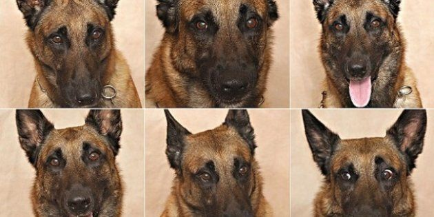 PHOTOS. Identifier les émotions du chien: selon une étude américaine les hommes y