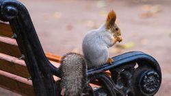 Pourquoi y-a-t-il des écureuils dans les parcs