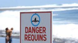 L'État autorise la pêche de requins dans la réserve naturelle de La