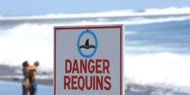 La Réunion: La pêche de requins autorisée à l'intérieur de la réserve naturelle marine par le