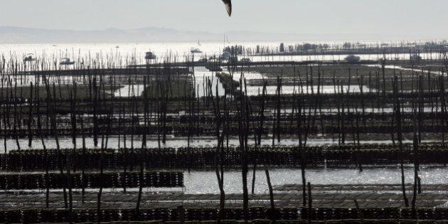 Bassin d'Arcachon: interdiction temporaire de manger des moules, coques et