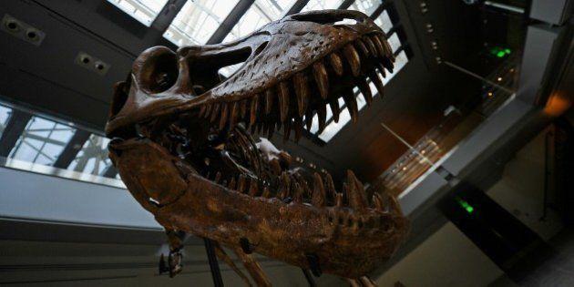 Une nouvelle espèce de dinosaure carnivore découverte au Portugal: le Torvosaurus