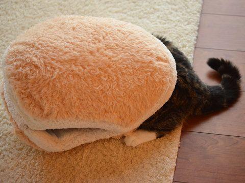 PHOTOS. Un abri pour chat en forme de...