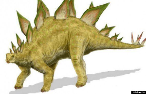 PHOTOS. Dinosaures : des relations sexuelles en position du missionnaire pour éviter la