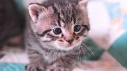 Regarder des vidéos de chats pour lutter contre le
