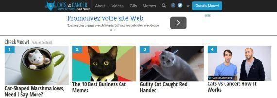 Regarder des vidéos de chats pour lutter contre le cancer, c'est