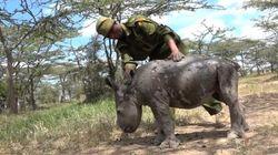 Ce bébé rhinocéros va vous faire