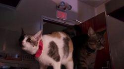 Quand les chats remplacent les vélociraptors de Jurassic