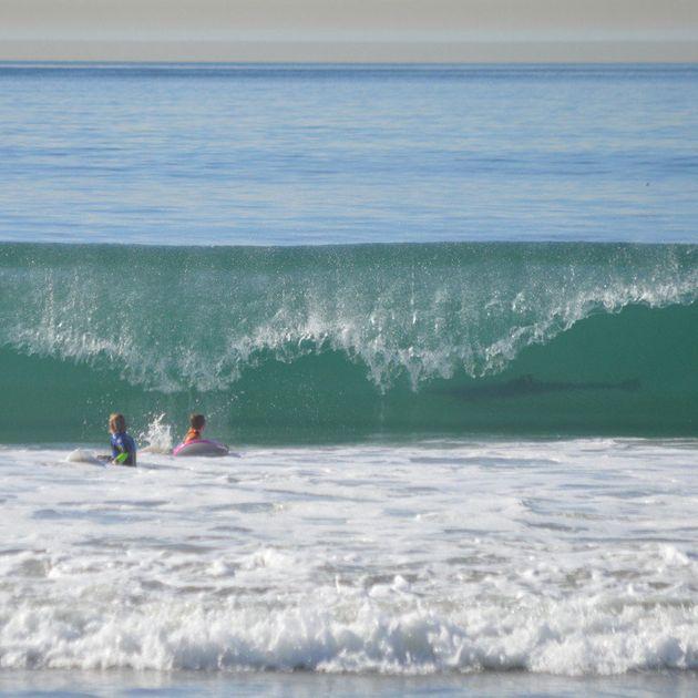 PHOTO. Un requin se cachait dans le creux de la