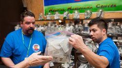 Le cannabis, ça peut rapporter gros (à