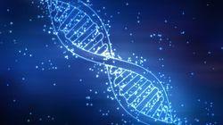 On peut maintenant observer l'activité de milliers de gènes en temps