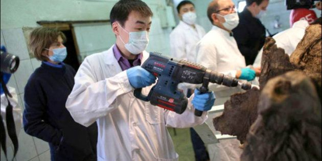 Clonage du mammouth : le sang retrouvé dans une carcasse suscite l'espoir des