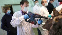 Ces chercheurs veulent cloner le mammouth (et ils devraient pouvoir le