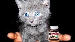 Les djihadistes recrutent grâce au Nutella et au Lolcats? Daech répond à