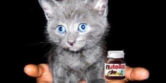 Daech raille CNN qui affirme que les djihadistes recrutent grâce au Nutella et au