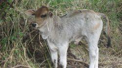 Le 20 mars, épargnons les animaux de nos
