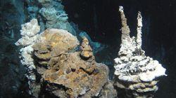 Ce microbe des profondeurs lève une partie du voile sur l'origine de la