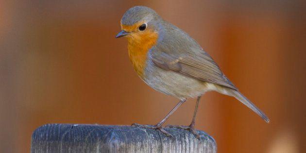 Birdify: le projet d'un Shazam pour les chants
