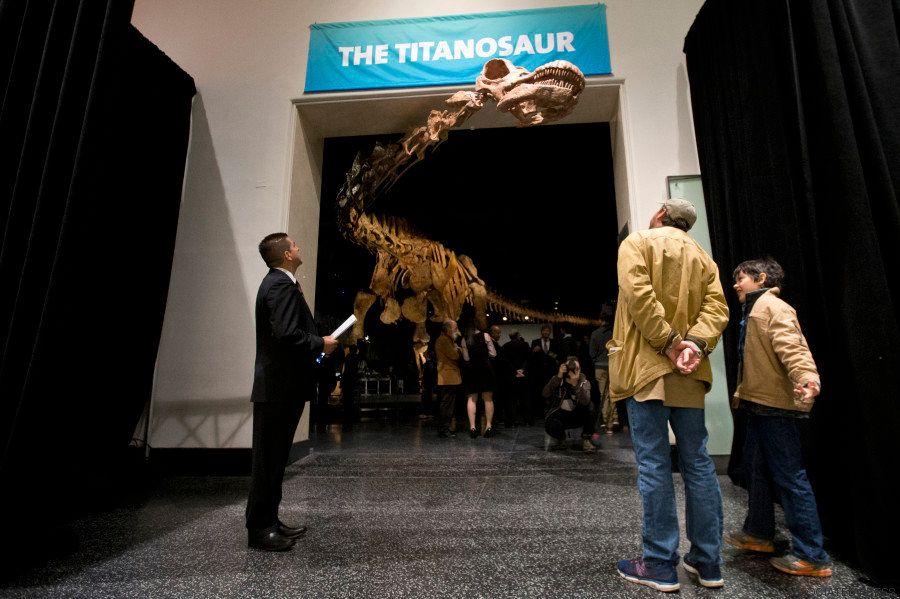 Ce nouveau dinosaure est tellement grand qu'il ne rentre pas dans le musée d'Histoire naturelle de New