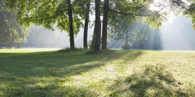 Les espaces verts favorisent la bonne santé mentale sur la