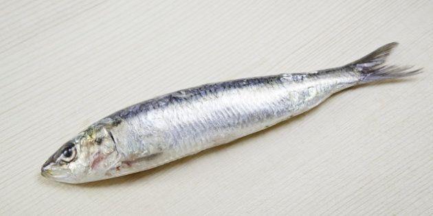 fresh sardines  detail of raw ...