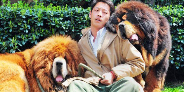 Un chien vendu pour 1,4 millions d'euros en