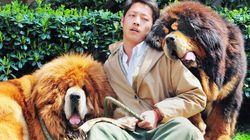 Un chien vendu pour 1,4 millions