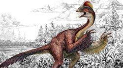 Découverte d'un étrange dinosaure aux allures de poulet