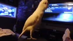 VIDÉO - Cet oiseau adore le rap old