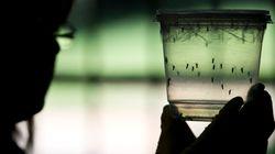 Ce qu'il faut savoir sur le virus Zika qui met la Martinique en