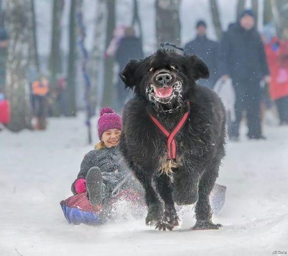La photo d'un chien et d'une petite fille dans la neige a bien fait rire les