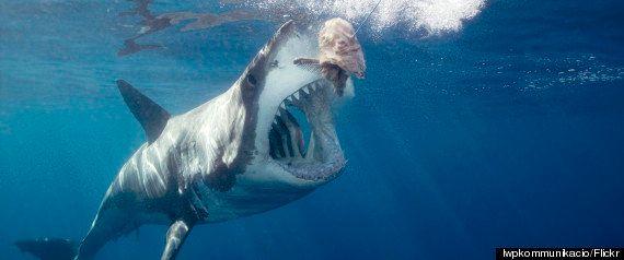 Comment les documentaires animaliers trichent avec la