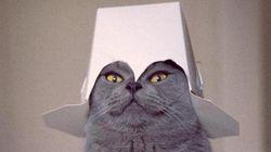 PHOTOS - Ce chat vaut le