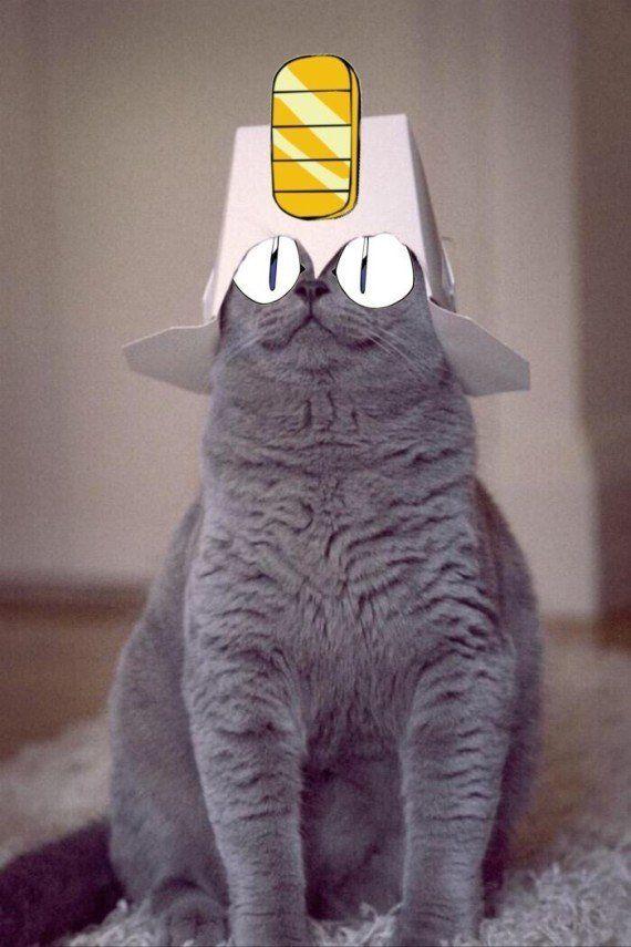 PHOTOS. La photo de ce chat a beaucoup amusé les
