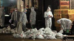 H7N9, la nouvelle souche de la grippe aviaire, fait un sixième mort en