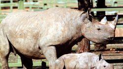 Il tue l'un des derniers rhinocéros noirs pour 350.000